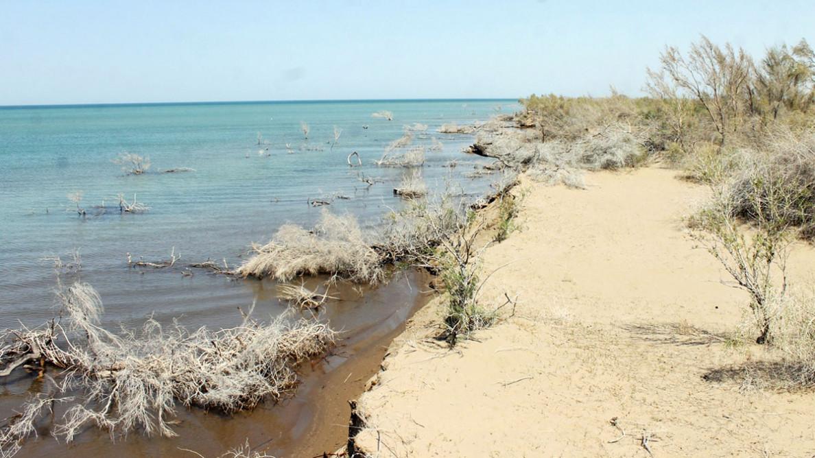 Путешествие в заповедный мир туркменской природы: озеро Сарыкамыш